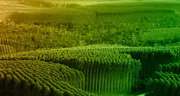 Visão corporativa de operação florestal